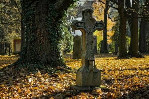 Autumn autumn leaves autumn light cemetery Free Photo