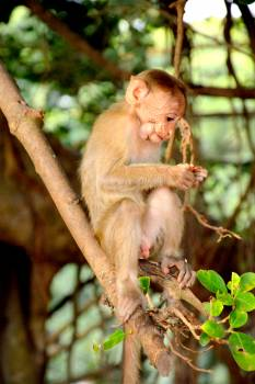 Branches eating eating healthy monkey #57783
