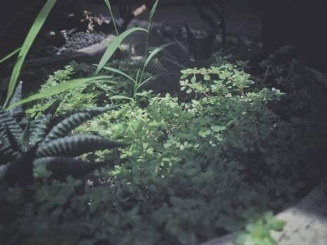 Floral grass green grow #57784