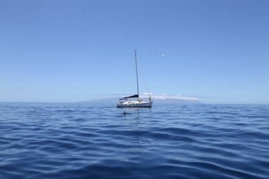 Blue boat dolphin sea Free Photo