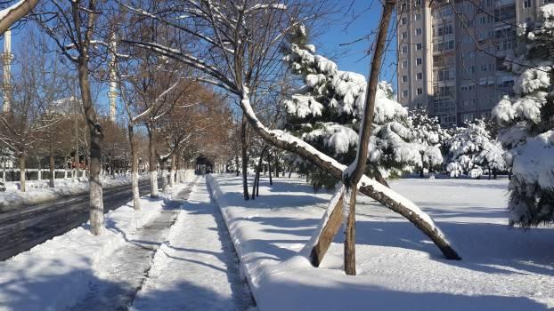 Snow winter Free Photo