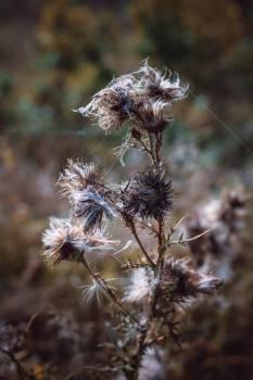 Autumn flowers nature thistle Free Photo