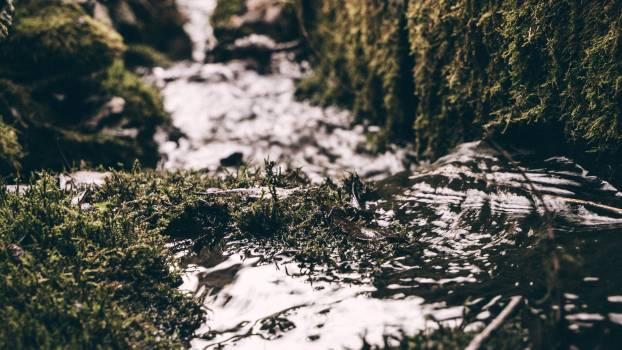 Cold daylight environment grass Free Photo