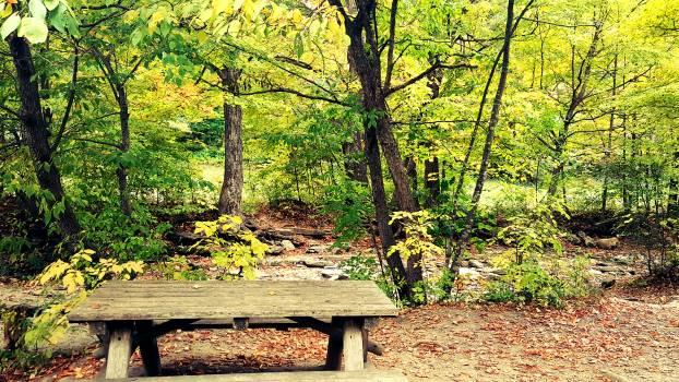 Autumn colours autumn leaves bench fall foliage #58198