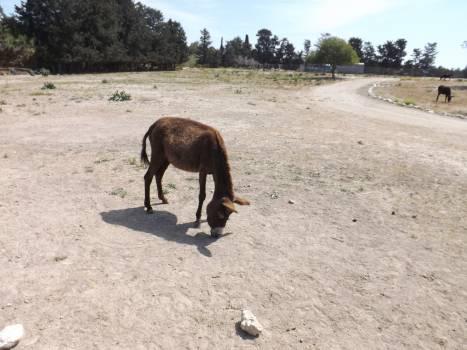 Donkey Free Photo