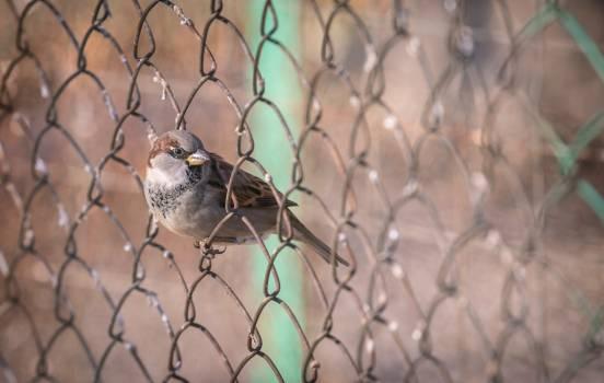 Animal bird nature #58386