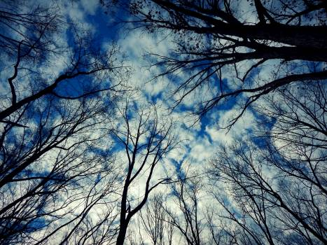 Dead trees Free Photo
