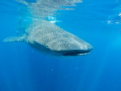 Action adventure ocean photography #58430
