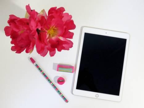 Background flower minimal pink Free Photo