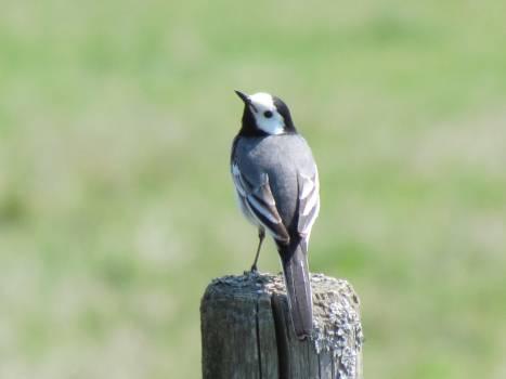 Small bird #58723