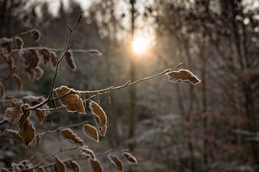 Beech leaves sun sun rays #58842