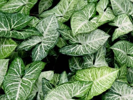 Foliage green plant plantas Free Photo