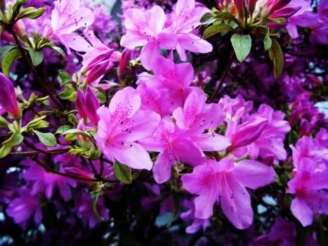 Beautiful flowers colours flowers plants #59066