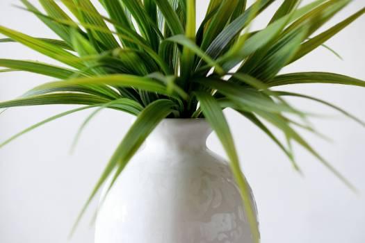 Close-up of Palm Leaf Free Photo