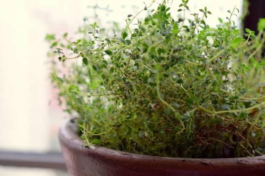 Close-up of Plants Free Photo