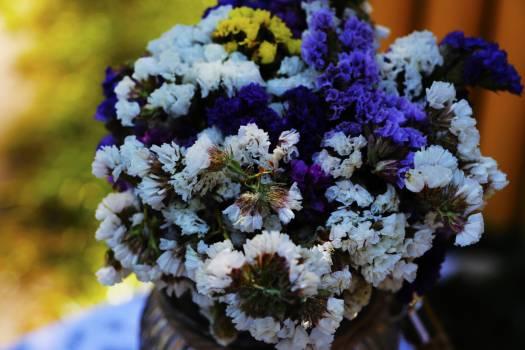 Close-up of Purple Flowers Free Photo