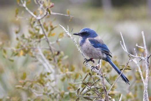 Bird Perching on Branch #59952