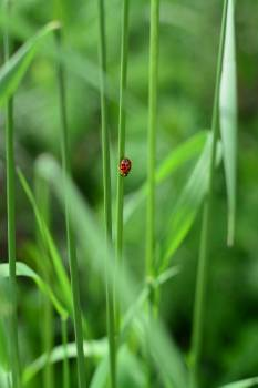 Close-up of Ladybug on Grass Free Photo