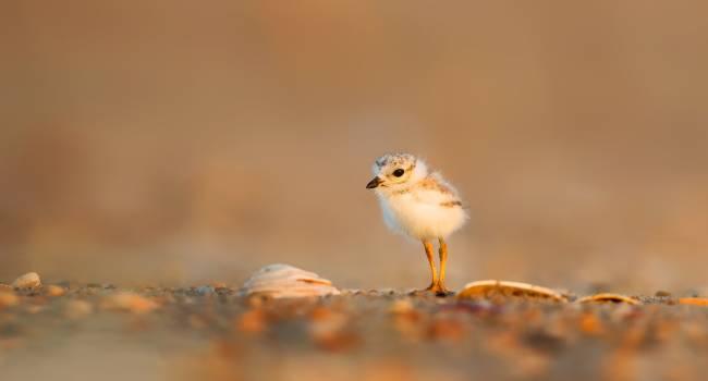 Close-up of a Bird Free Photo