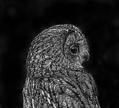 Close-up of Owl #59988
