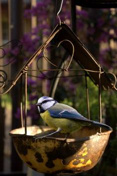 Close-up of Bird Perching Outdoors #60004