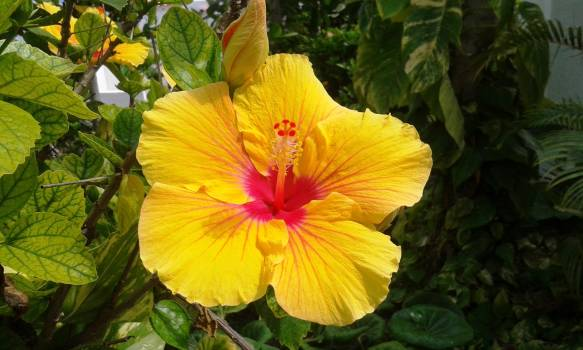 Close-up of Yellow Flower Blooming Outdoors Free Photo