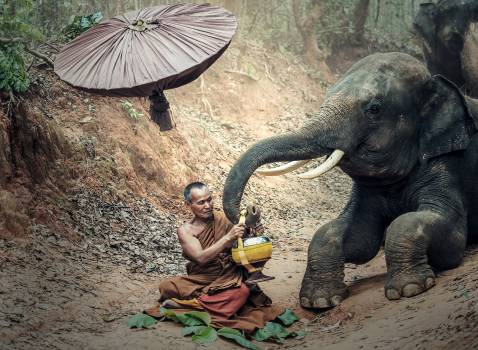 Full Length of Young Woman Sitting on Elephant Free Photo