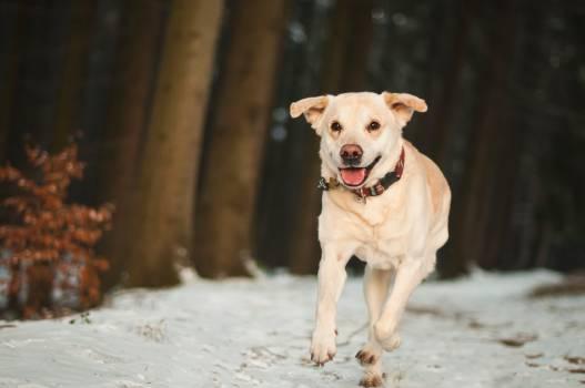 Portrait of Dog #60746