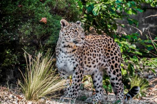 Photo Of Leopard #60767
