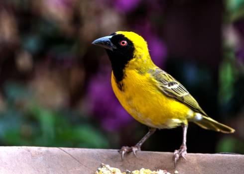 Bird Perching on Outdoors Free Photo