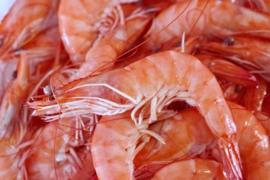 Close-up of Crab #60918