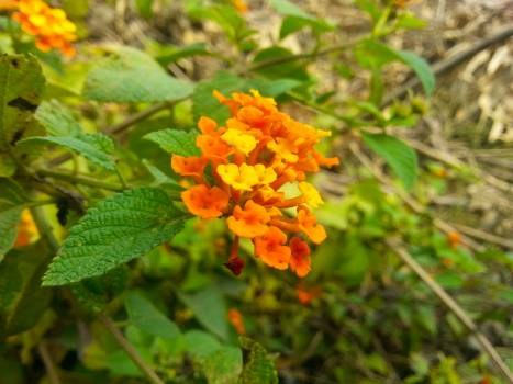 Close up of orange marigold blooming outdoors #61036