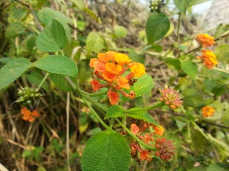 Close up of orange flowers blooming outdoors Free Photo