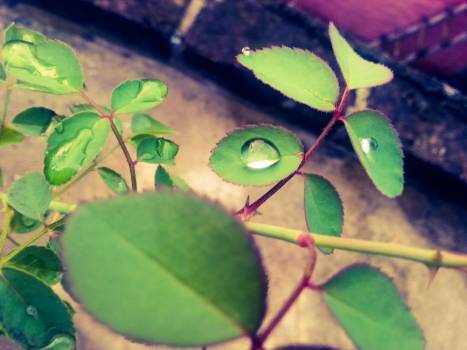 Close up of ivy growing on plant Free Photo