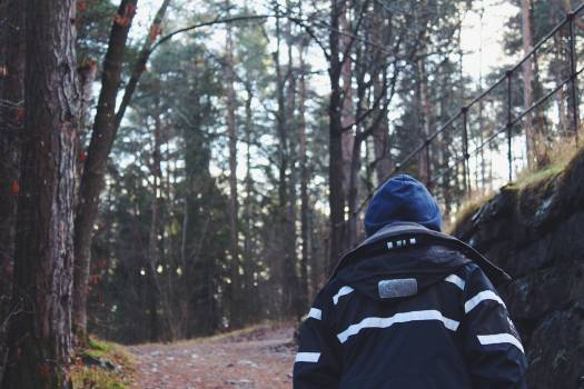 Back View of Man in Forest Free Photo