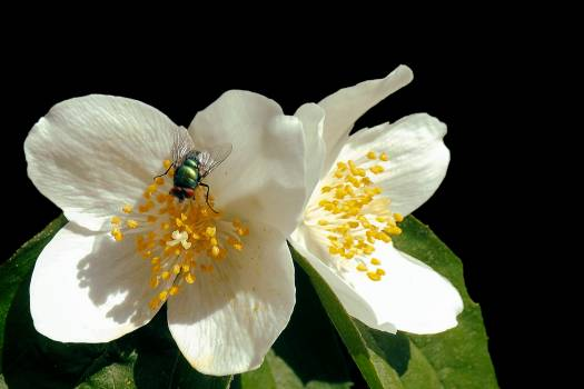 Close-up of Insect on Flower Against Black Background Free Photo