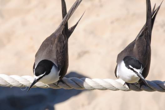 Close-up of Bird Perching on Branch #61481