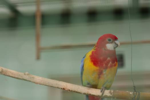 Close-up of Parrot Perching on Branch Free Photo
