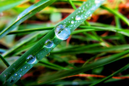 Close-up of Dew Drops on Plant Free Photo