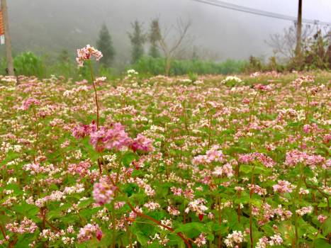 Close-up of Flowers Growing in Field Free Photo