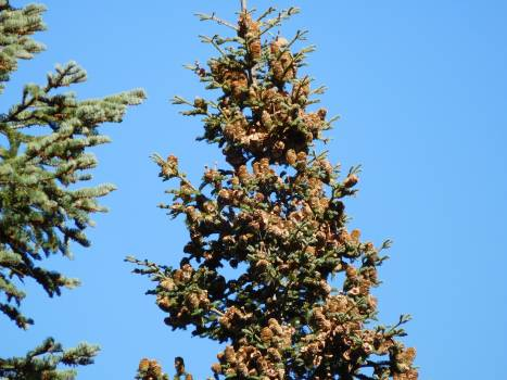 Low Angle View of Tree Against Clear Blue Sky #62197
