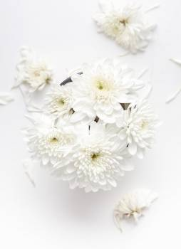 Close up of white flowers Free Photo
