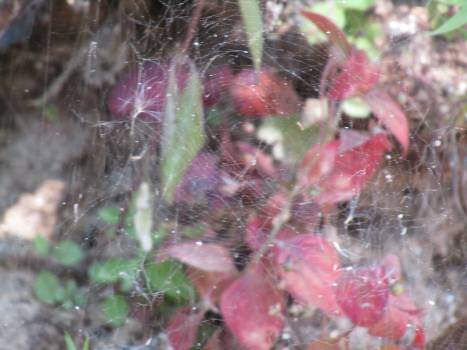 Close up of spider web on tree Free Photo