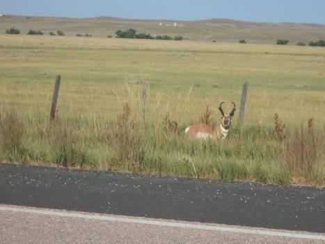 Deer on Grass Free Photo