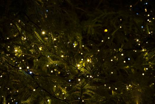 Low Angle View of Illuminated Christmas Tree Against Sky at Night Free Photo