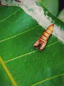 Close up of insect on leaf Free Photo