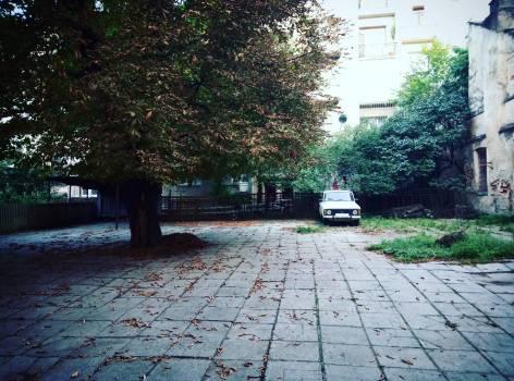 Trees in City #62757