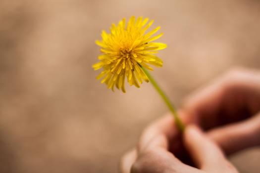 Woman Holding Flower #62937