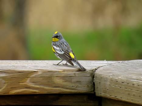 Close-up of Bird on Wood Free Photo