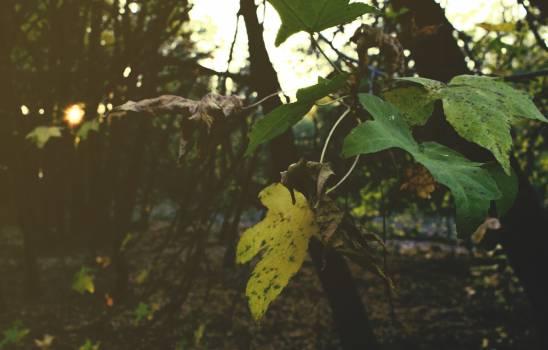 Close-up of Tree Free Photo